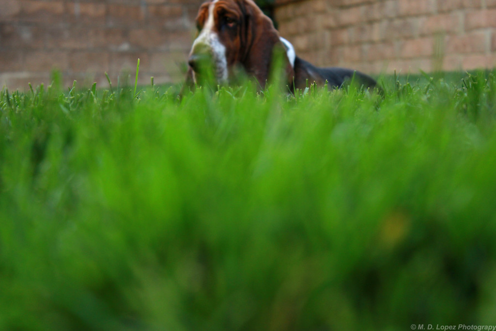 dog-behind-greenery